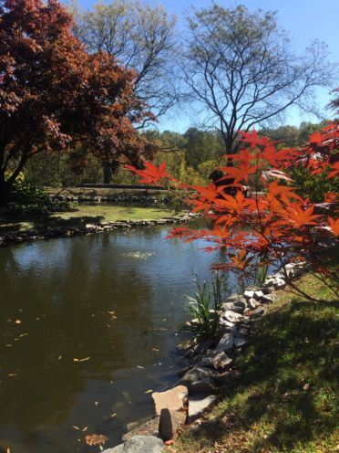 pond, fall leaves
