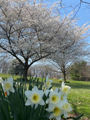 spring, poetry